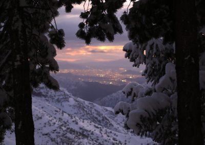 NIEVE Pinos con nieve a santiago